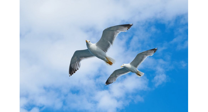 sky-birds-powerful-responsive-slider-plugin