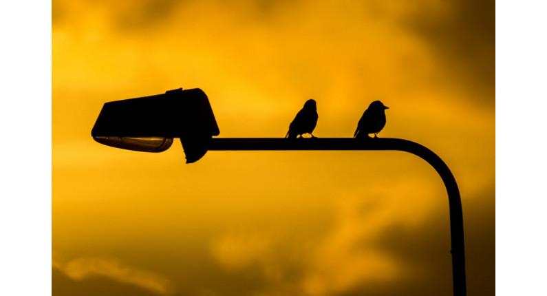 birds-street-responsive-slider-plugin-cminds