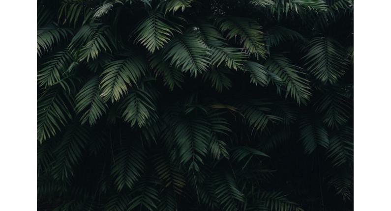 plants-simple-powerful-responsive-slider-plugin
